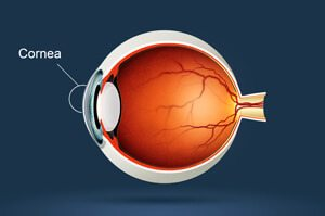 Boulder Eye Care & Surgery Center Doctors iStock 000022417583 Small 300x199 - iStock_000022417583_Small