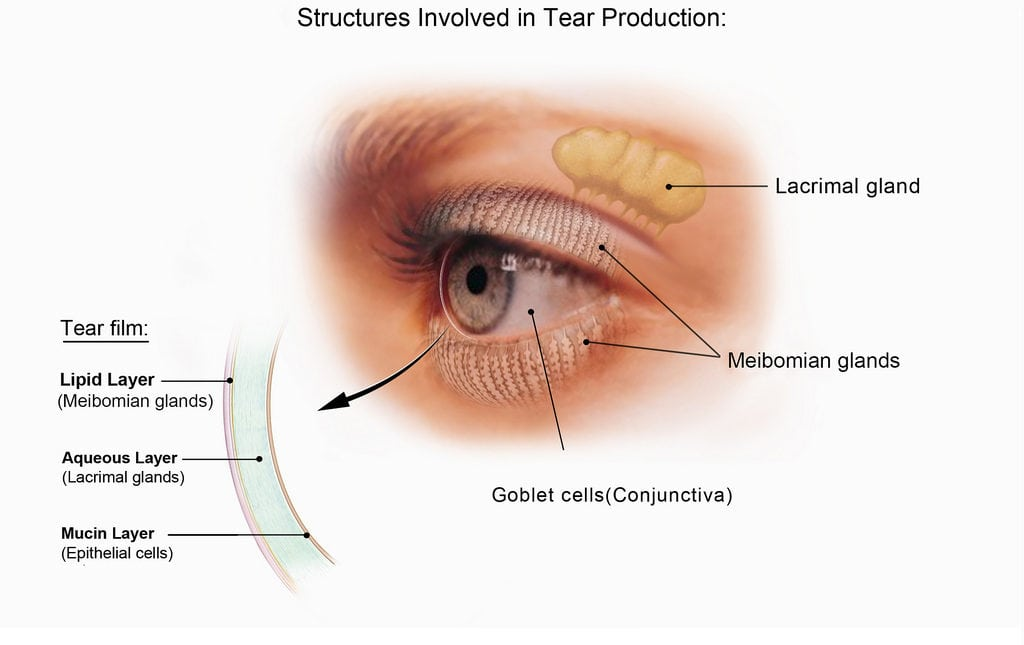 Boulder Eye Care & Surgery Center Doctors Structures Involved in Tear Production DRY EYE 1024x645 - DRY EYE