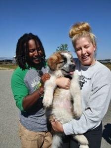 Boulder Eye Care & Surgery Center Doctors Cane Marley Megan 225x300 - Eye Care Center Dog Days of Summer